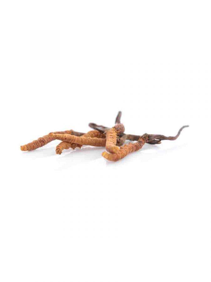 Hawlik Cordyceps Extrakt Pulver in Kapselform Kapseln